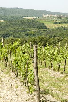 italian wine, italian wine regions, italy, vineyard