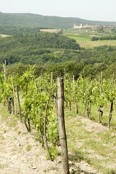 italian wine, italian wine regions, italy, vineyard